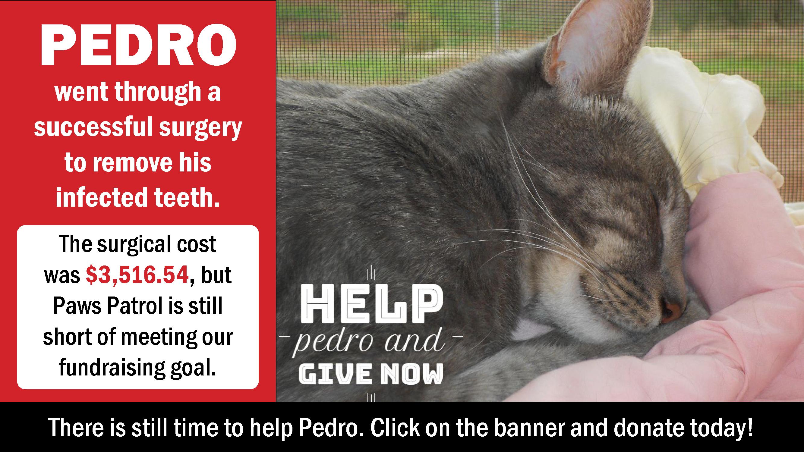 Pedro, gray tabby, sleeping.